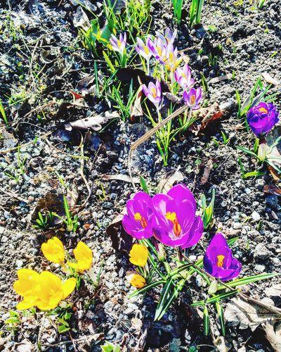 Flower Freshness Springtime