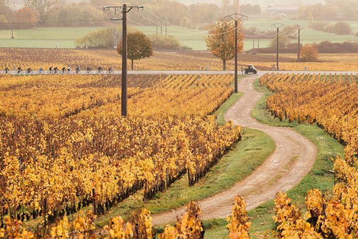 Cyclist Road Transportation Agriculture Autumn Beauty In Nature Bicycle Car Crop  Cultivated Cycling Day Growth Landscape Large Group Of People Nature Outdoors Rural Scene Scenics Tranquil Scene Tranquility Vine Vineyard Way Plowed Field Cultivated Land Field Crop  Tree