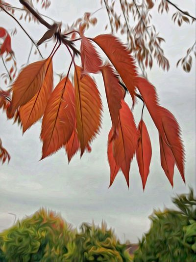 Autumn Nature Leaf Plant Close-up Beauty In Nature Landscape Change Nature On Your Doorstep Changing Colors Autumn Orange Color Nature Tree