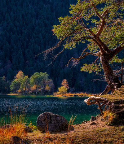 Bavaria Travel Beauty In Nature Branch Forest Germany Lake Landscape Mountain Nature Night No People Outdoors Scenics Tree Tree Trunk Water