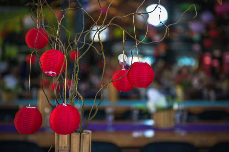 Close-up of red lanterns hanging on plant