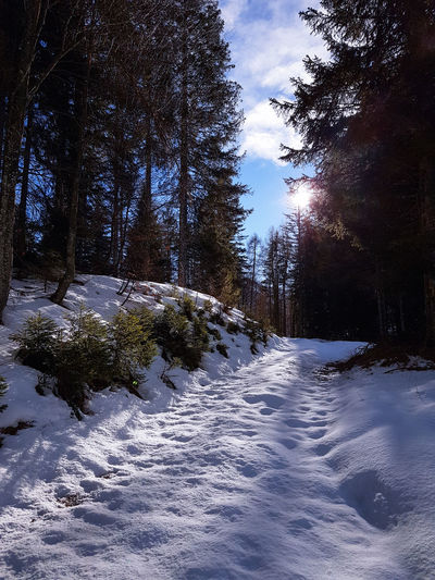 Val Zemola Hiking Sun Sunlight Backlight Snow Winter Cold Temperature Nature Tree No People Frozen Outdoors Tranquility Day Sky Landscape Beauty In Nature Go Higher