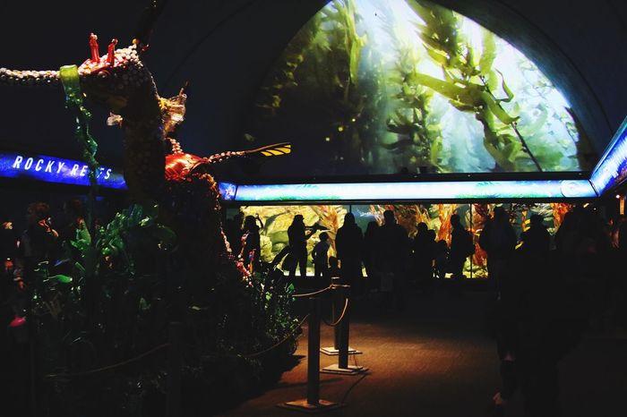 Shedd Aquarium Chicago CanonRebel Canon Hobbyist Sheddaquariumchicago Sheddaquarium Museum Chicago Indoors  Performance Event Illuminated Performing Arts Event Animal Themes
