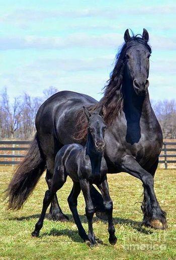 cavalos de raça!!! Mãe e Filhote!!!