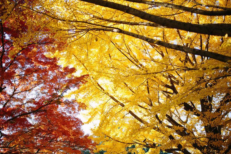 Autumn Autumn