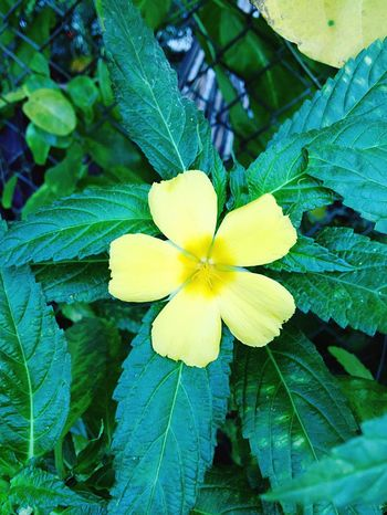 Flower Nature Yellow Petal Growth Fragility Beauty In Nature Flower Head Freshness Leaf Close-up Outdoors Blooming Green Color No People Day