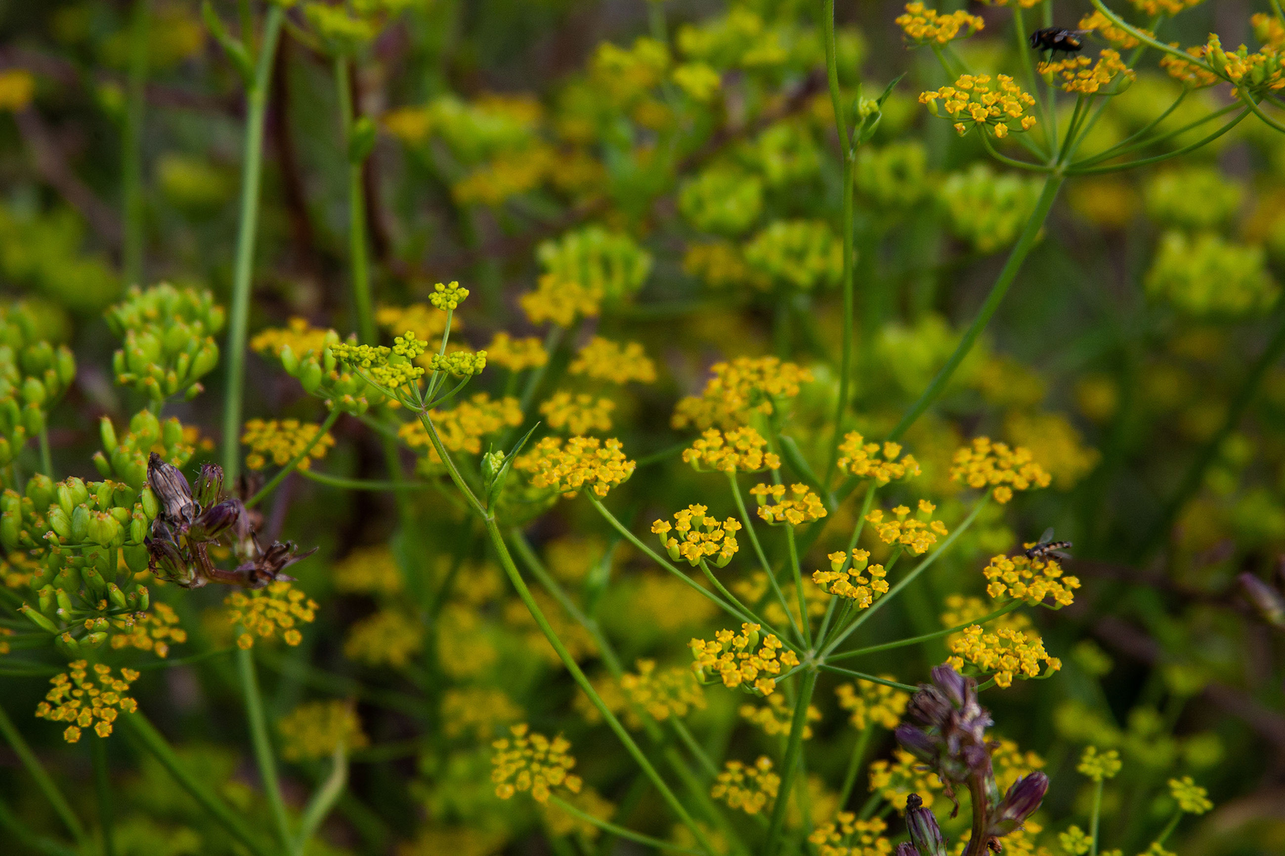 flower, flowering plant, plant, beauty in nature, growth, freshness, fragility, vulnerability, yellow, nature, day, close-up, selective focus, no people, green color, focus on foreground, petal, outdoors, flower head, land