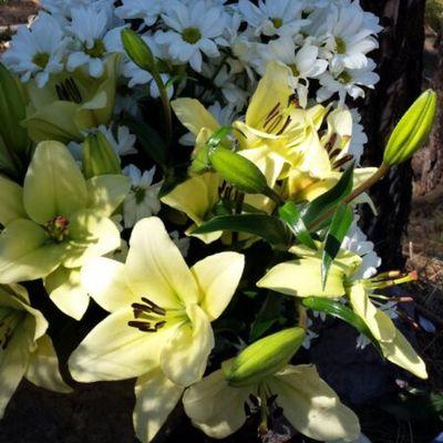 Y mi segunda foto del quinto día del reto Hablemosdetesoros : mis flores. Creo que son margaritas y liliums y, desde hace 889 días, de mis favoritas. @jacquelinesanfiel y @maurorguez 😙😙😙😙