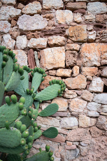 Cactus SPAIN Wall Wall - Building Feature Old Buildings Old Ruin No People Stone Wall Green Color Day Growth Plant Nature Solid Stone - Object Succulent Plant Brick Outdoors Plant Part Freshness Leaf Close-up Abundance Minimalism Minimalist