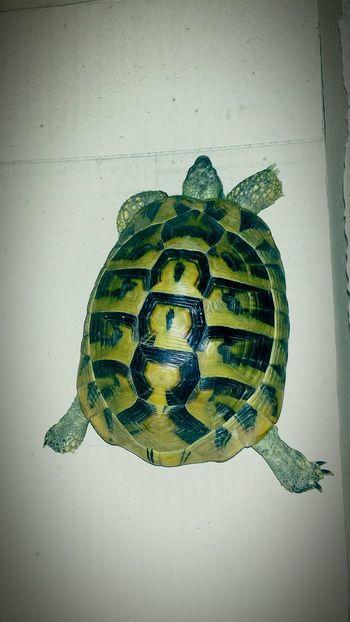 My new buddy. First photo on EyeEm. Turtle Turtle Love Turtle 🐢 Nature Turtlelover First Eyeem Photo