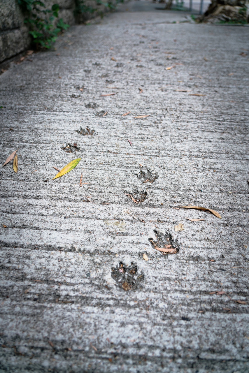 day, no people, leaf, plant part, footpath, high angle view, nature, plant, selective focus, outdoors, textured, autumn, wood - material, animal themes, street, city, animal, insect, tranquility, close-up, leaves, surface level, concrete