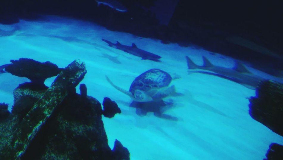 ??amazing Fish Ilovethesea Exploring