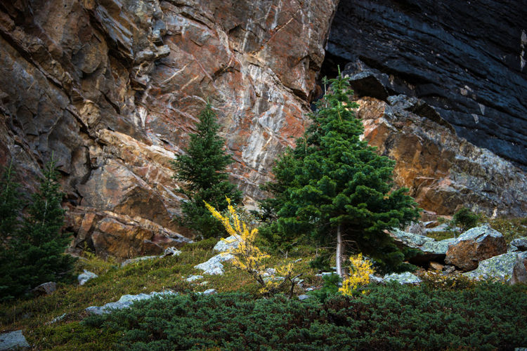 Rock formation amidst trees in forest