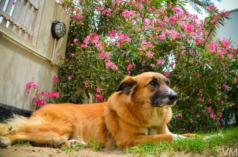 Rocky. :) Dog Lover Pet Pet Photography  Nikon D5100