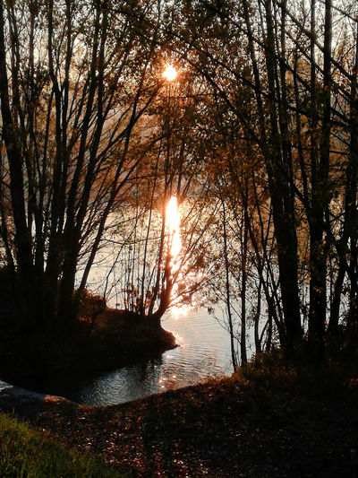 Sunset_collection Trees Water Reflections Beauty In Nature Nature No People Outdoors Scenics - Nature Sunbeam Sunlight Sunset Tranquil Scene Tranquility Water My Best Photo