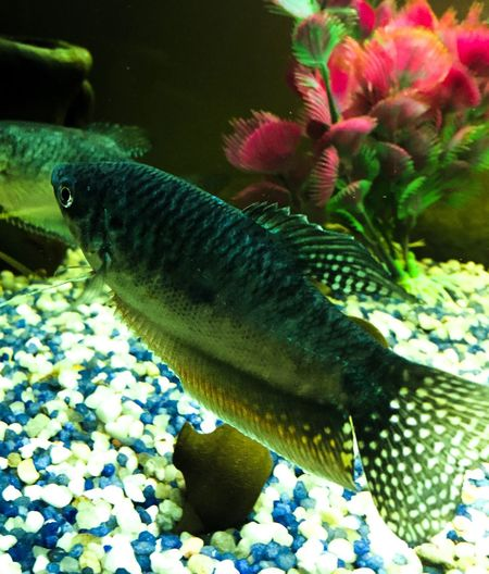Colorful Nature Underwater Aquarium Water Colors Acquariofilia Animal Themes Beauty In Nature Freshness Fish Swimming Blue