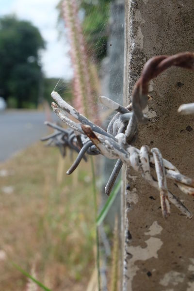 fence, barbed fence Barbed Fence Cement Pole Fence Nature Outdoors Roadside Sharp Thorn