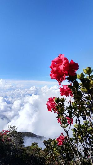 Flower Nature Beauty In Nature Tree Red Plant Petal Blossom Sky Fragility Growth Flower Head No People Cloud - Sky Pink Color Day Low Angle View Outdoors Springtime Freshness