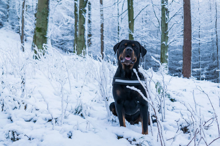 Dog on snow field during winter