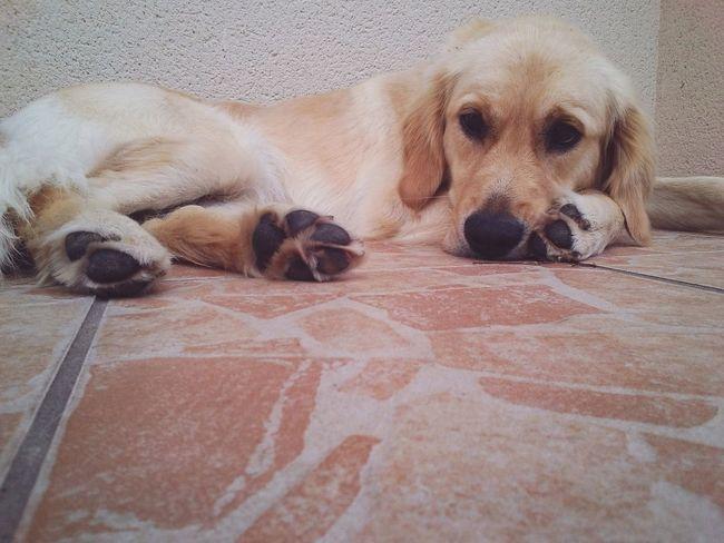 Houlenn :-) Dog Love