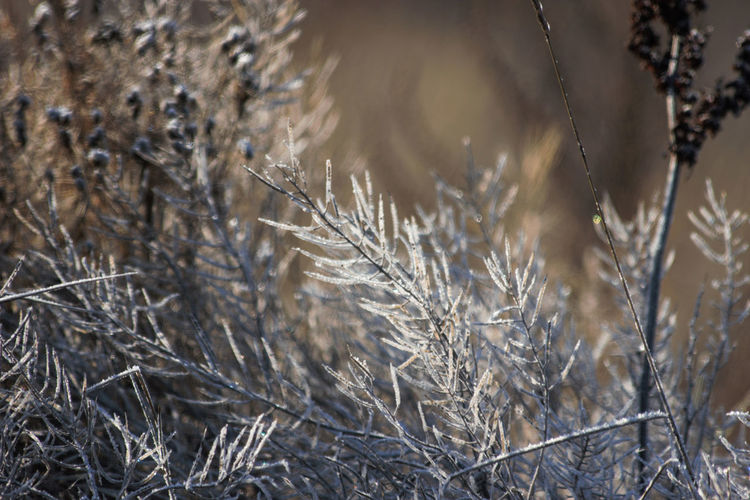 Close-up of frozen plants during winter