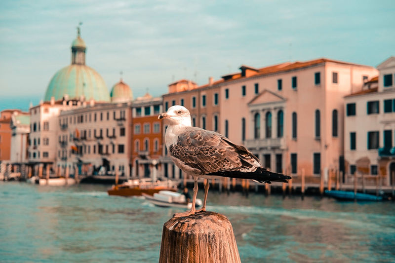Shadesofcolour Nautical Vessel Venezia Leisure Activity Travel Destinations Travel Built Structure Water Veneto Italy Soft Colors  City Venice, Italy Architecture Gabbiano Bird Stories From The City
