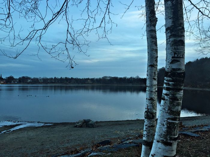 Birch trees series Shades Of Winter Winter Solstice Landscape Trees Nofilter