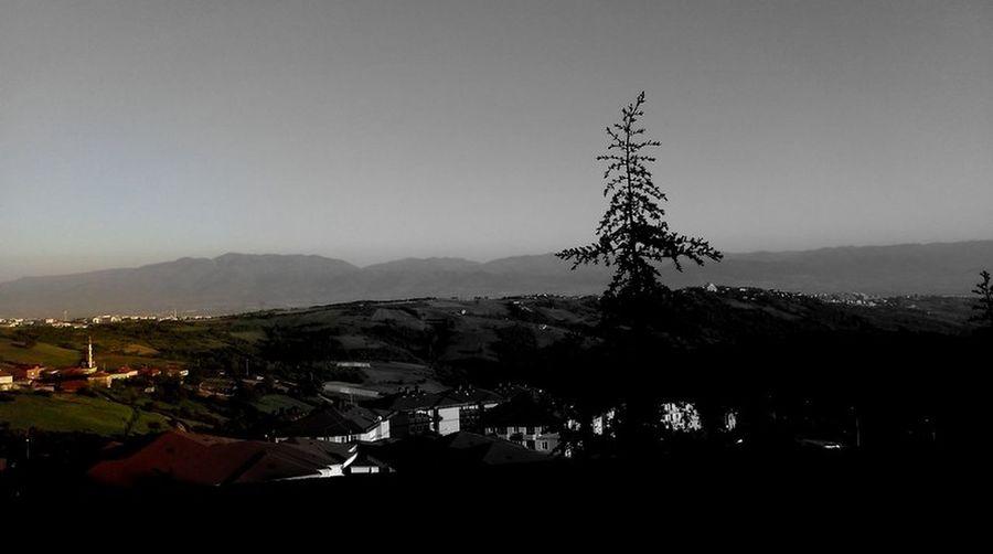 #green #Mountain #pine Tree #remote #sweet #village #white-black-r Turkey/Kocaeli