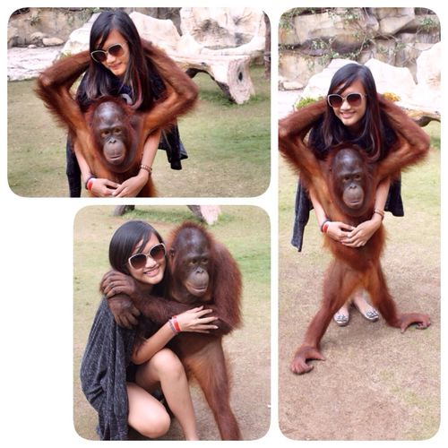 This is mine, how about you? My love from the stone Check This Out Nature Save Orangutan