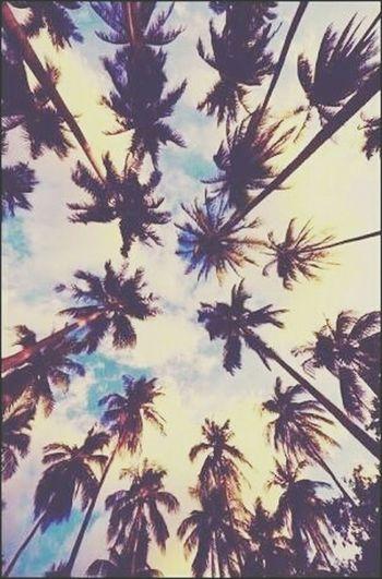 Island🌴 Branch Palm Tree Followme ❤️ Creativity Celebration likeforlike #likemyphoto #qlikemyphotos #like4like #likemypic #likeback #ilikeback #10likes #50likes #100likes 20likes likere Outdoors Plant Backgrounds TreeLikealways No People Sky Nature Close-up Low Angle View Day Needle - Plant Part Beauty In Nature