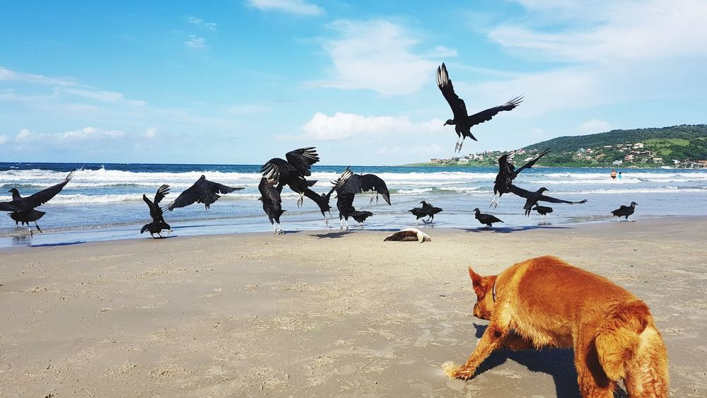 Last shot. Trying to save a dead turtle's life. Outdoors Horizon Over Water Animal Themes Turtle Turtles Dog Dog Lover Crow Vulture Dead Dead Turtle Dead Body Payback Attacking Position