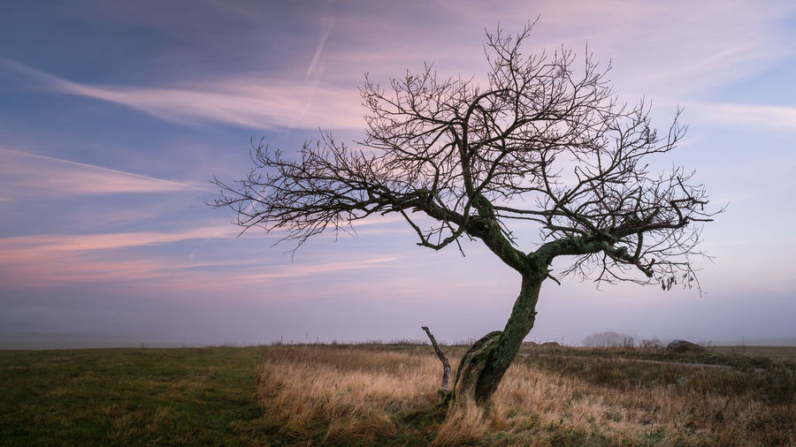 Bare Tree Beauty In Nature Branch Day Field Grass Horizon Over Land Isolated Landscape Lone Majestic Nature No People Outdoors Remote Scenics Sky Solitude Sunset Tranquil Scene Tranquility Tree Tree Trunk First Eyeem Photo