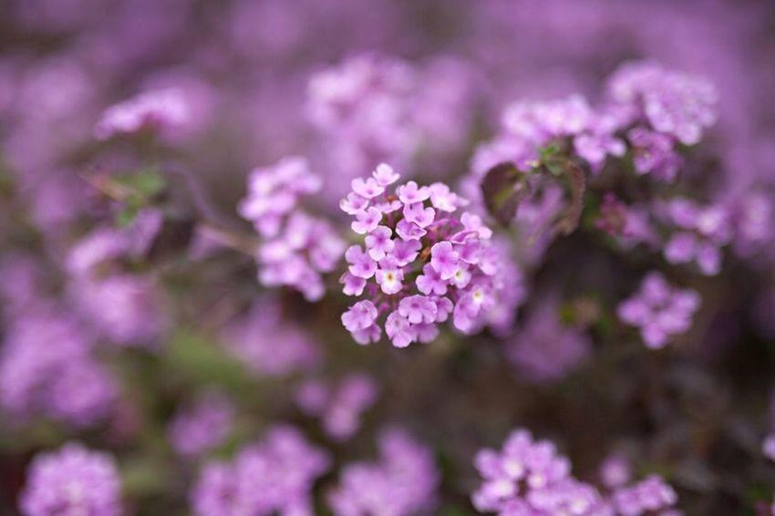 Violet By Motorola Flower in Spring