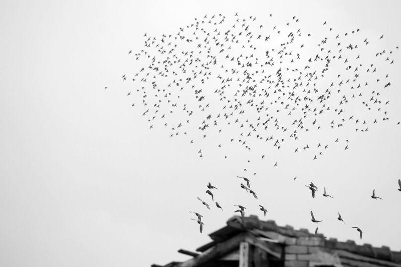 Bird Black &